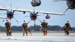 الكلاب المتروكة في مطار كابول بعد الانسحاب الأميركي جاهزة للعودة للعمل