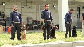 Αφγανιστάν: Τα σκυλιά του αεροδρομίου στα χέρια των Ταλιμπάν