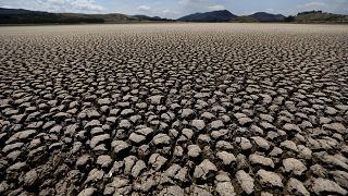 Kolombiya'nın Suesca kentinde, Suesca lagününün göl yatağı, yıllar süren az yağışın ardından kurudu
