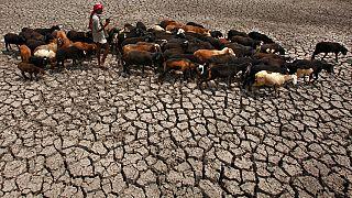 Pásztor legelteti birkáit egy kiszáradt folyómederben Hyderabad-tól nem messze, Indiában, 2010-ben.
