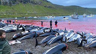 Les carcasses de dauphins à flanc blanc sur le rivage de l'île d'Eysturoy aux Féroé, en mer du Nord, 12 septembre 2021