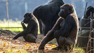 Atlanta Hayvanat Bahçesi
