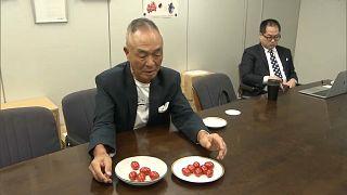 Japonya'da GDO'lu domatesler sofralarda yer almaya başladı