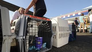 A shelter dog waits to be loaded onto an airplane bound for Wisconsin at the McComb-Pike County Airport in McComb, Miss., on Tuesday, Sept. 7, 2021.