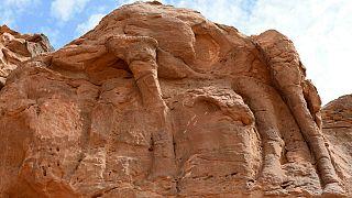 Suudi Arabistan'da yeni keşfedilen 21 deve ve at kabartması önemli ölçüde aşınmış durumda