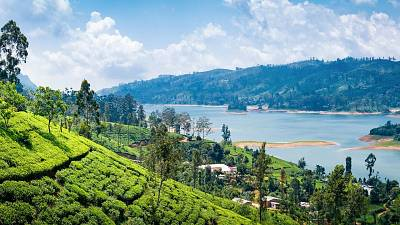 The view from a tea plantation near Nuwara Eliya, Sri Lanka.