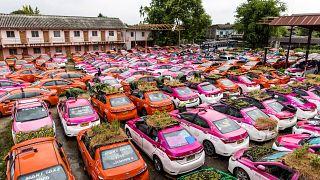 Бангкокские таксисты выращивают урожай в своих машинах