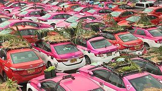 سائقو سيارات الأجرة يزرعون الخضار في سيارات الأجرة المهجورة في تايلاند.