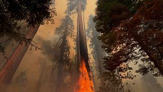 شاهد: رجال الإطفاء يصارعون من أجل حماية البساتين من حرائق كاليفورنيا