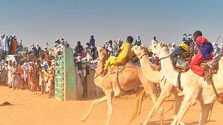 Le Sahara s'enflamme pour ses courses de chameaux