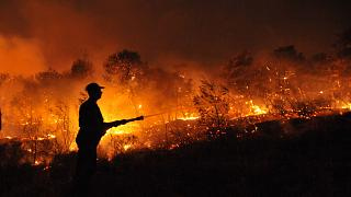 A firefighter sprays water at a burning forest near Nea Makri, north of Athens, on Monday, Aug. 24, 2009