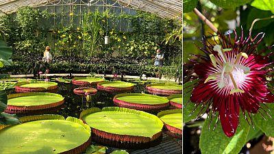 Kew Gardens, UK.