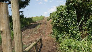 Uganda: an electric anti-poaching initiative succeeds in preserving wildlife