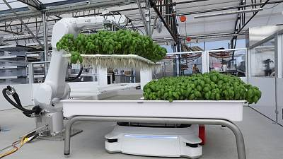 A robotic arm system named Ada lifts Genovese Basil plants for its roots to be inspected at the Iron Ox greenhouse in Gilroy, California.