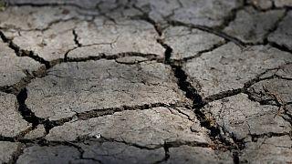 İklim değişikliği: Kuraklık ve çaresizlik çiftçileri göçe zorluyor
