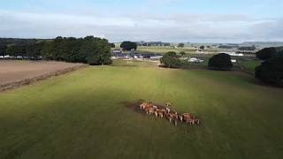 Milchwirtschaft in Grossbritannien