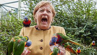Almanya Başbakanı Angela Merkel, İngiltere, Marlow'da bir kuş parkını ziyaret ederken.