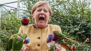 المستشارة الألمانية أنغيلا ميركل تتلقى نقرة من ببغاوات حطت إلى يديها أثناء زيارتها لحديقة الطيور في ولاية مكلنبورغ فوربومرن