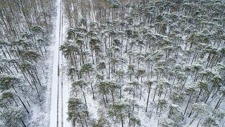 غابة بالقرب من مدينة رين الفرنسية في يوم مثلج