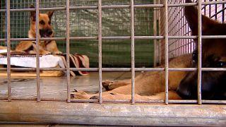 Perros rescatados bajo el volcán Cumbre Vieja