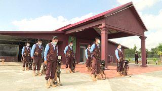 تدريب كلاب المناجم على شم فيروس كورونا في كمبوديا