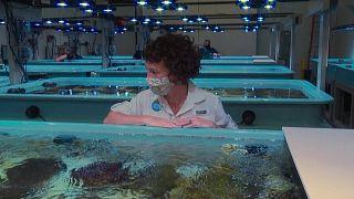 مرض غامض يفتك بشعاب المرجان في فلوريدا.. ومختبر يسابق الزمن لإنقاذها