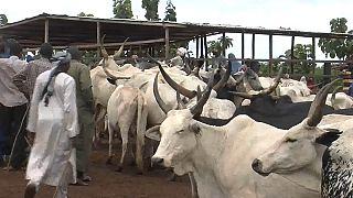 Le marché du bétail crée de l'emploi en Centrafrique