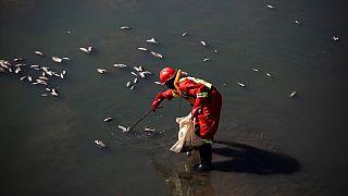 """Afrique du Sud : pollution maritime """"catastrophique"""" lors des émeutes"""