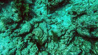 Du corail mort au large de Key Largo, en Floride, le 23 septembre 2021