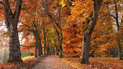 Europe is full of Autumnal colours.