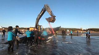 Una excavadora mecanizada es utilizada para sacar a la ballena de la playa, 5/10/2021, La Lucila del Mar, Argentina