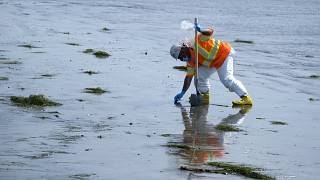 Operação de limpeza da maré negra na Califórnia