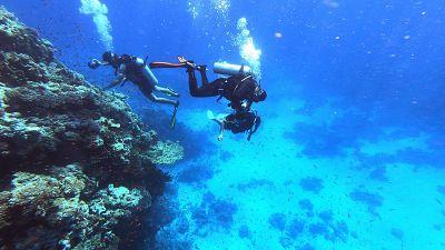 Egypte : la disparition des coraux menace la biodiversité
