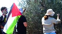Palestinians pick olives next to Israeli Evitar outpost