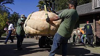 Abóbora de mais de 900 kg premiada nos Estados Unidos