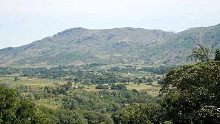 Reforestation programme is under way in Madagascar