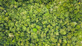 Indonesia is home to the world's third-largest expanse of tropical forest