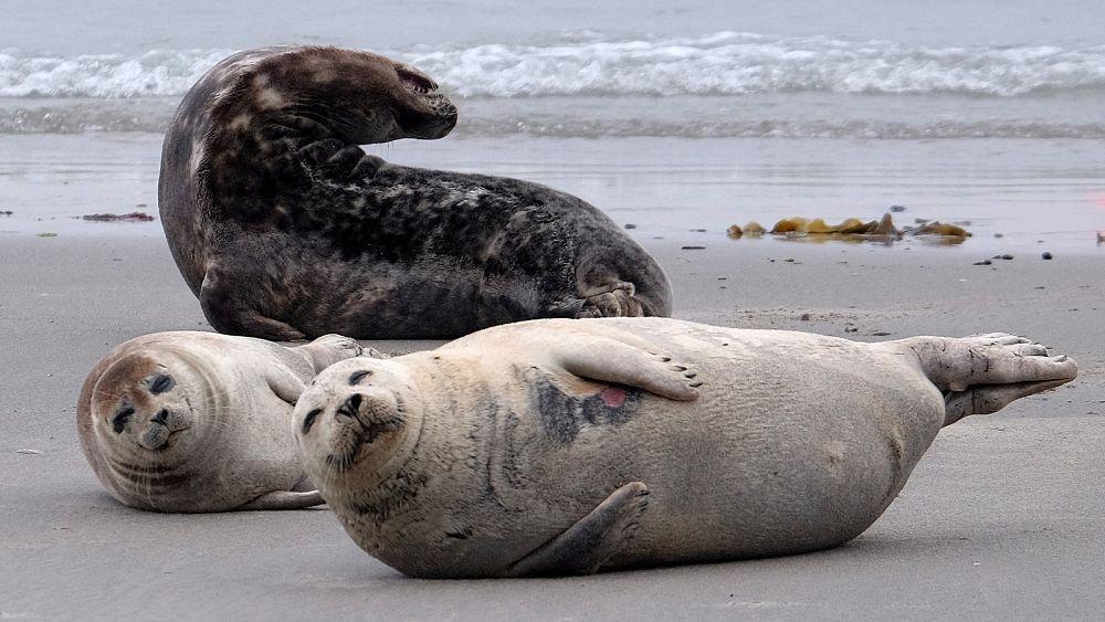 Bienvenido a la escarpada isla del Reino Unido donde las focas gobiernan y los humanos están prohibidos