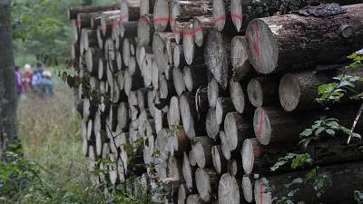 The logging has been the source of a standoff between the conservative Polish government in Warsaw and the European Union.