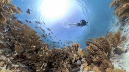 Πώς μπορούμε να προστατεύσουμε και να αποκαταστήσουμε τους κοραλλιογενείς υφάλους;