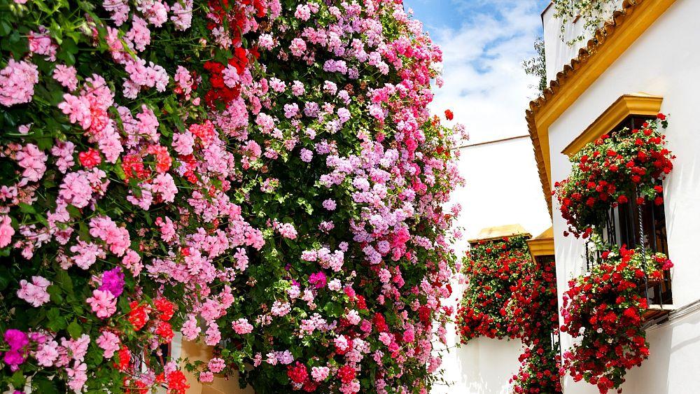 Córdoba: 'La ciudad de las flores' vuelve a florecer tras la pausa del COVID
