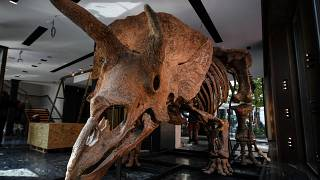A triceratops reaches nearly 7 million euros in Paris