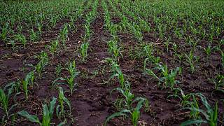 Climate change to force crop switch for small farmers: experts