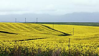 No tilling, no chemicals: A S.African farmer's response to climate change