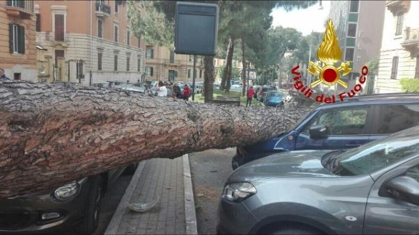 Cade grosso pino a Roma, colpite auto