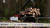 Activists step up protest against logging in ancient Polish forest
