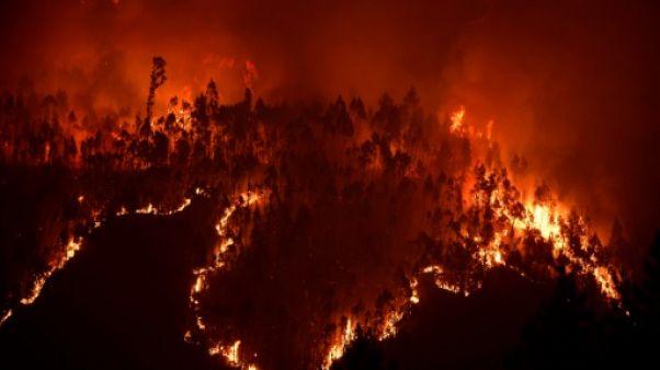 Incendie de forêt au Portugal: ce que l'on sait