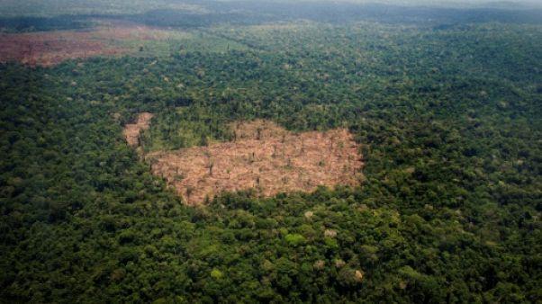 Brésil: la forêt amazonienne pourrait perdre son plus généreux protecteur