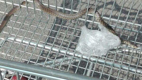 Trovato serpente in carrello Esselunga