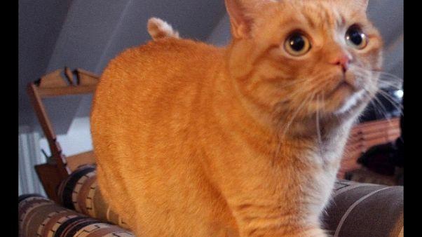 Incendio, gatto miagola e salva famiglia